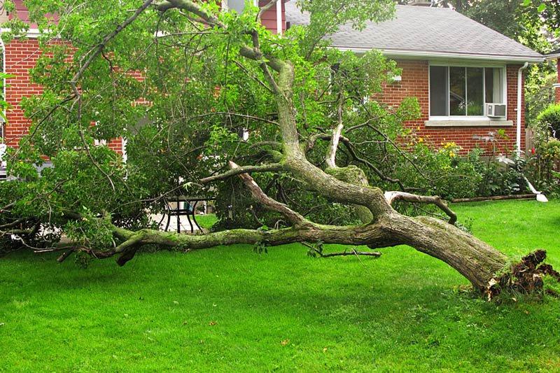 fallen-tree-1.jpg