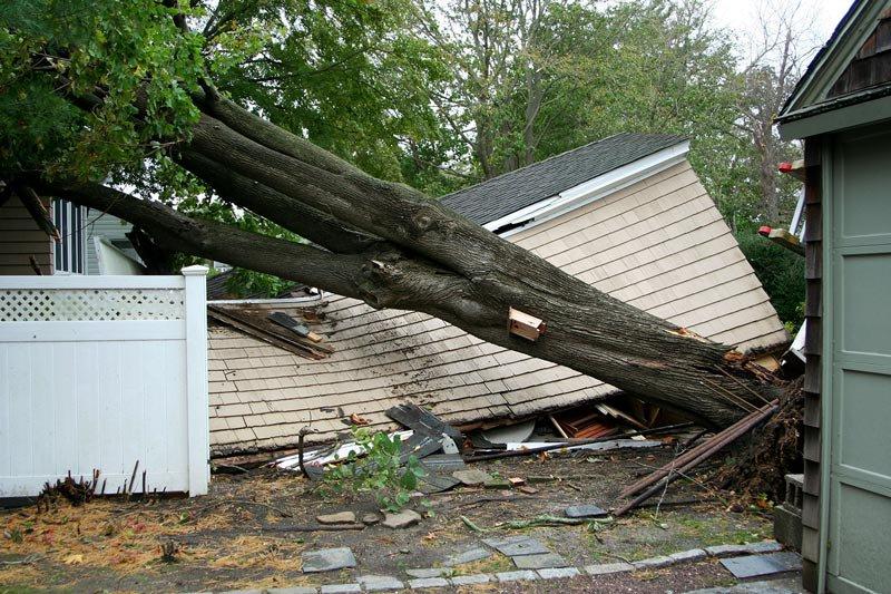 fallen-tree-2.jpg