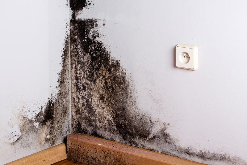 mold-attorney-west-palm-beach-fl.jpg