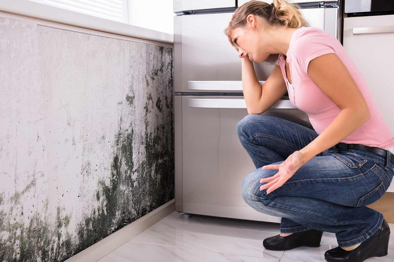 mold-insurance-claims-jupiter-fl.jpg