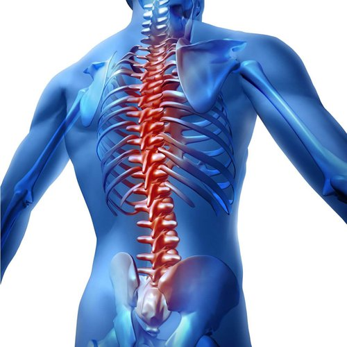 animated person with spine highlighted