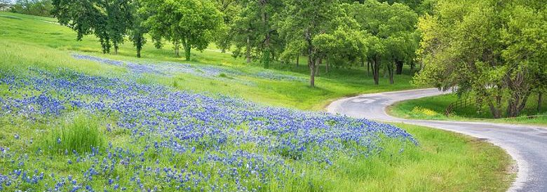 Blue flowers in grass and trees along a road