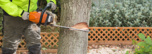 Man cutting down a tree