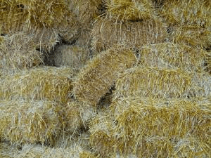 stacked bundles of hay