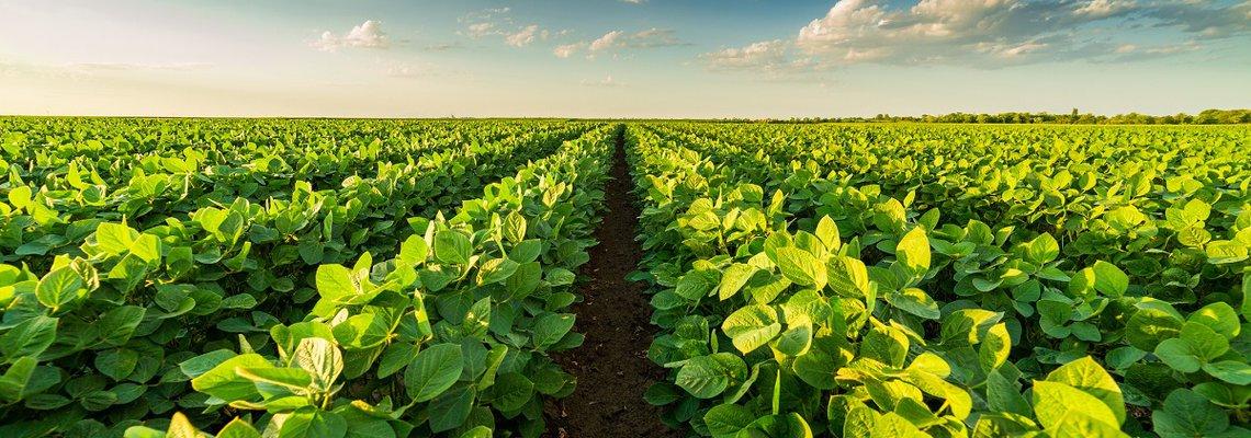 farm land.jpg