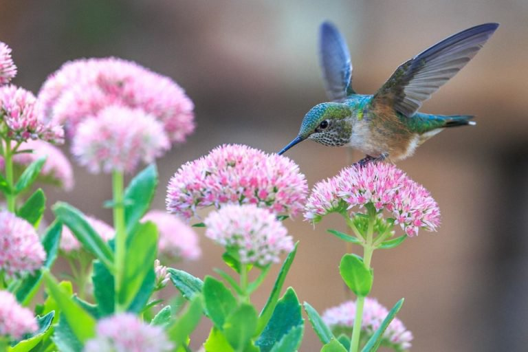 pink flowers and small bird