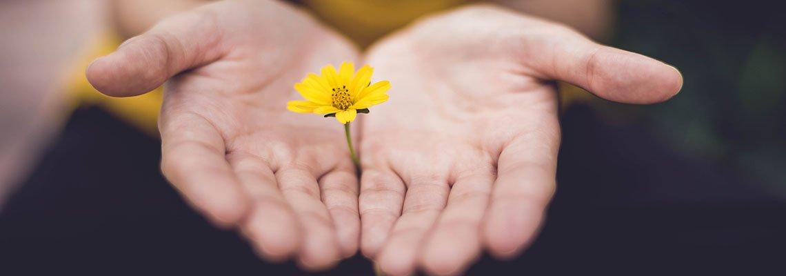 Sorry-Hands w.Flower.jpg