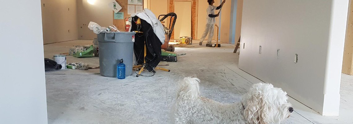Man repainting a home. Maltese dog standing in the hall