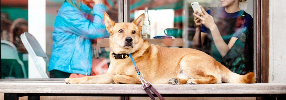 Dog Owner2