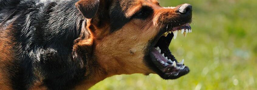 When_dogs_attack.original2.2e16d0ba.fill-1140x400.jpg