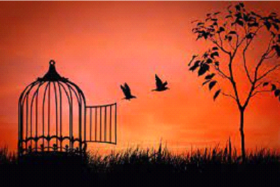 Birds Flying Away from Cage in Sunset