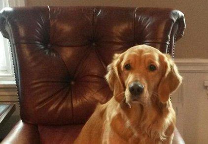Dog named Penny