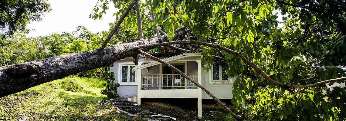 House with a tree fallen on it