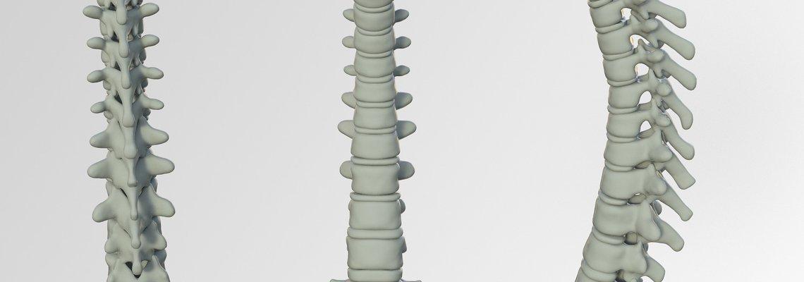 spine-3220105_1920.jpg
