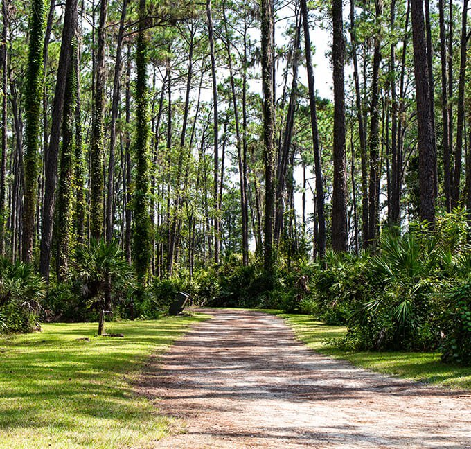 Path in Ocala National Forest