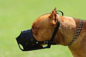 dog-bite2-300x200-e1510074923274-300x200.jpg