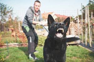 dog-bite3-300x200-300x200.jpg